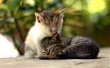 Title:Cute kitten-Windows 10 Wallpaper Views:2680