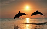 Title:Dolphins jump sunset-Animal HD Wallpaper Views:1507