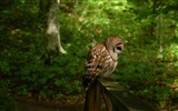 Title:Owl bird forest-Animal HD Wallpaper Views:1804