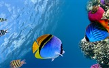 Title:Underwater coral fish ocean-Animal HD Wallpaper Views:1706