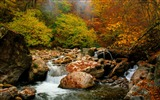 Title:Autumn Nature Beautiful Scenery Wallpaper Views:6304