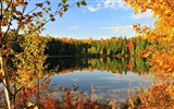 Title:different shades autumn-Photography Wallpapers Views:1333