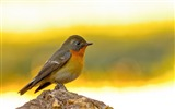 Title:Cute Little Birds Animals HD Wallpaper Views:3378