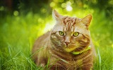 Title:Cute cat grassland-Photo HD Wallpaper Views:1294