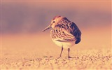 Title:Little birds color feathers-Photo HD Wallpaper Views:1731