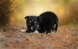Title:Puppy dog grass eyes-Photo HD Wallpaper Views:1681
