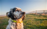 Title:dog grass collar-High Quality Wallpaper Views:1013