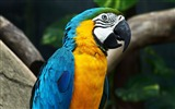Title:Amazing color parrot-Photography HD wallpaper Views:1682