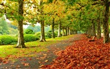 Title:Autumn Nature Photography HD Wallpaper Views:5370