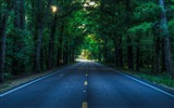 Title:Green Forest Road-Nature Photo HD Wallpaper Views:2278