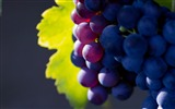 Title:Purple Grapes Green Leaves-fruit food wallpaper Views:2042