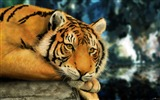 Title:bengal tiger-Photography HD wallpaper Views:2161
