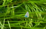 Title:butterfly grass-Photography HD wallpaper Views:1875