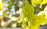Title:white grape bokeh-fruit food wallpaper Views:1237