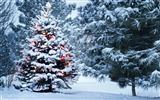 Title:Beautiful christmas tree-2016 Merry Christmas Wallpaper Views:1589