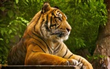 Title:Beautiful tiger-Animal Photo HD Wallpaper Views:1255