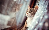 Title:Cat face window-Animal Photo HD Wallpaper Views:1035
