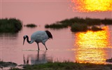 Title:Crane lake morning-Animal Photo HD Wallpaper Views:1142