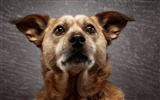 Title:Dog in the spotlight-Animal Photo HD Wallpaper Views:1286