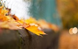 Title:Bokeh photography theme HD Desktop Wallpaper Views:4550