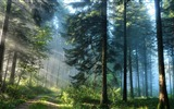 Title:Thick forest-High Quality HD Wallpaper Views:1052