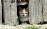 Title:kitten face fence-Animal Photo HD Wallpaper Views:1005