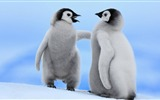 Title:Antarctica King Penguins Animal HD Wallpaper 02 Views:1056