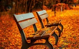 Title:Autumn Leaves Bench-Photo HDR Wallpaper Views:1572