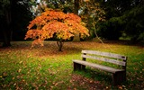 Title:Autumn Yellow Trees Bench-Nature Photo HD Wallpaper Views:1639