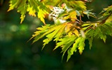Title:Autumn green leaves bokeh-Photo HDR Wallpaper Views:1696