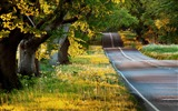 Title:Beautiful Forest Road Spring-HD Desktop Wallpaper Views:1170