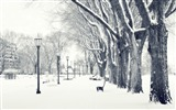 Title:Beautiful winter trees snow lamps park-Landscapes HD Wallpaper Views:1606
