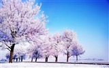 Title:Blue cold trees white sky winter snow-Landscapes HD Wallpaper Views:1772