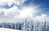 Title:Forest beautiful snowy nature winter-Landscapes HD Wallpaper Views:1683
