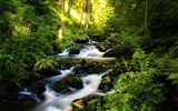 Title:Green Forest Rivers Germany-Scenery HD Desktop Wallpaper Views:1446