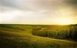 Title:Landscape Summer Field Forest Rain-Nature HD Wallpaper Views:1282