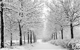Title:Winter White Black Park-Landscapes HD Wallpaper Views:1792
