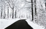 Title:Winter forest clean road scenery-Landscapes HD Wallpaper Views:1428