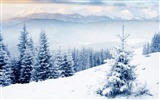 Title:Winter season snow forest trees-Landscapes HD Wallpaper Views:1841