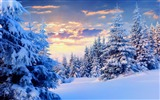 Title:Winter trees snow forest-Landscapes HD Wallpaper Views:1790