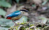 Title:Beak Feathers Color Stone Bird-Animal World HD Wallpaper Views:799