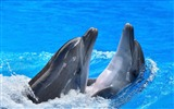 Title:Dolphins steam water spray-Animal Photo HD Wallpaper Views:1467