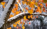 Title:Dreamy Winter Snow Scene Close-up HD Wallpaper Views:3231