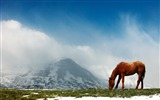 Title:Horse mountains snow peaks sky-Animal Photo HD Wallpaper Views:1156