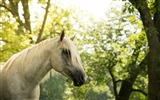 Title:Nature Tree Summer Horse-Animal World HD Wallpaper Views:855