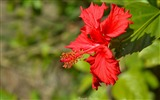 Title:red flower in park-Flowers Photo HD Wallpaper Views:1174