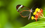 Title:Butterfly insects flowers-High Quality HD Wallpaper Views:904