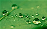 Title:Drops Green Water Leaf-Macro photo HD Wallpaper Views:1158