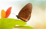 Title:Fresh Green Leaves Butterfly-High Quality Wallpaper Views:1131