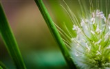 Title:Grass drops flower bokeh-Macro Photo HD Wallpaper Views:1082